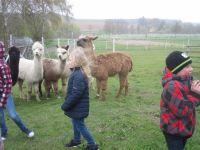 Die Lamas und Alpakas duerfen wir ganz nah betrachten